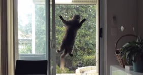 mission impossible screen door cat lolcats