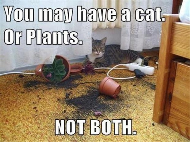 you may have cats or plants, not both