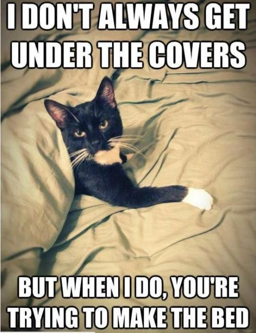 i don't always get under the covers