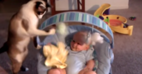 babysitter cat watches over baby cute