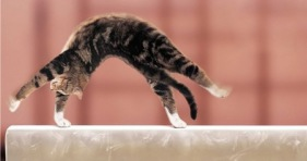 acrobatic cats-cathletes