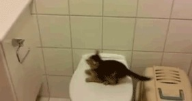 9 lives adorable kitten jump attempt fail-funny-cute kitten