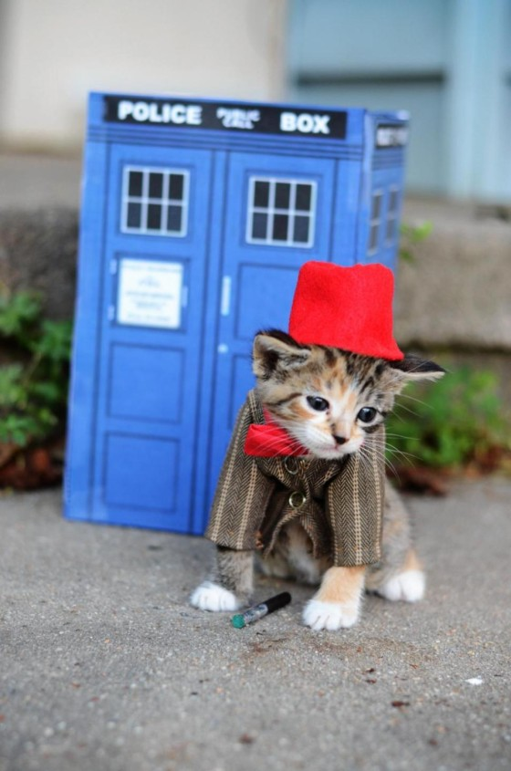 drwhokitty kitty costumes