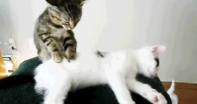 kitten massage parlor-cute cat massages