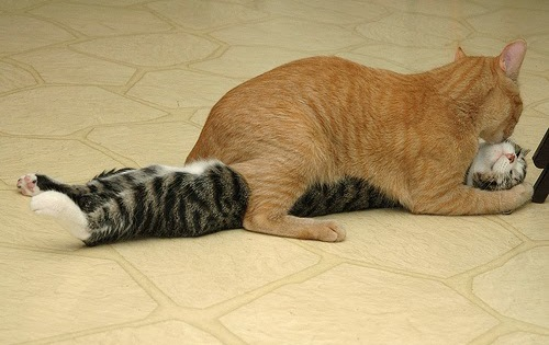 cat huggs kitten
