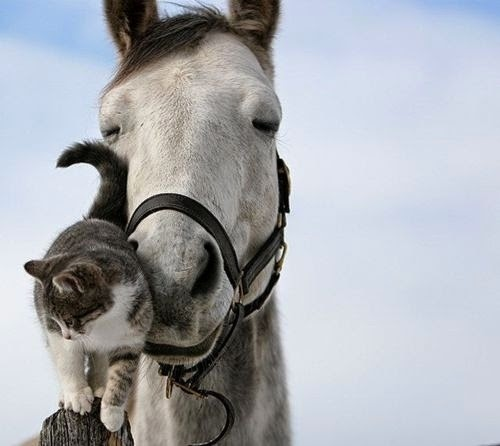 Cutest Relationships-cats-cat loves horse-cute