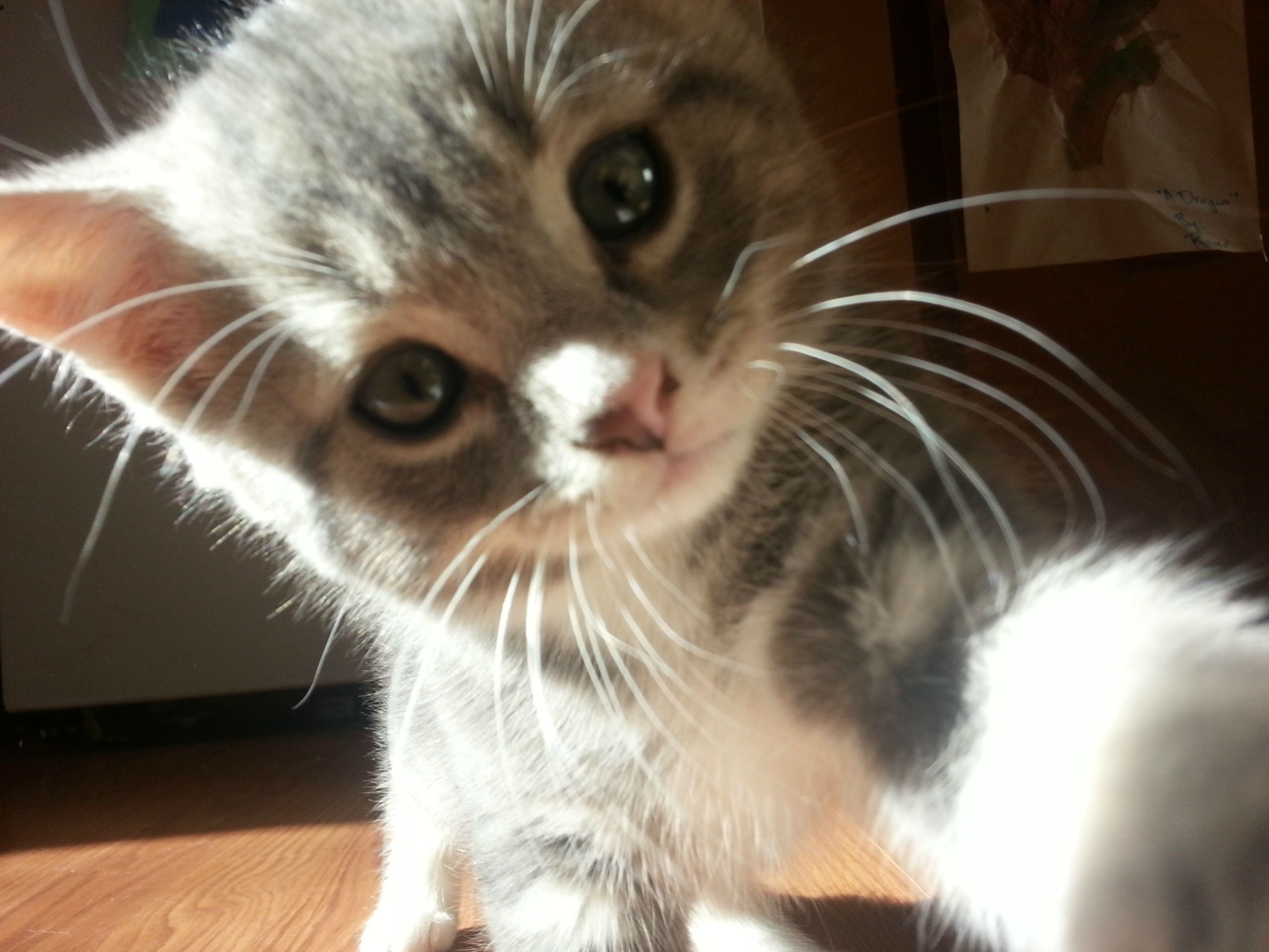 8 Awesome Cat Selfies Cats vs Cancer