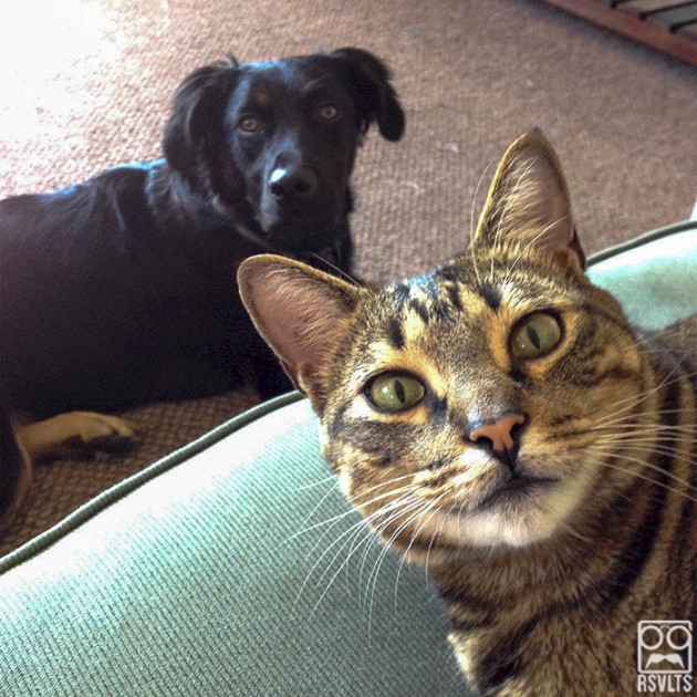 cats-dog and cat-selfies-animals-cute-selfie-rottweiler-10