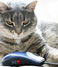 cats-mouse-technology-kitten-cute