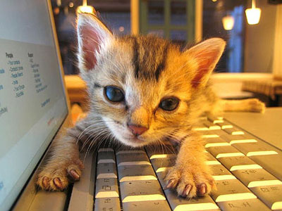 kitten-cute-adorable-laptop-tech-cats
