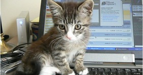 kittens-cats-kitty-technology-cats-cute-adorable