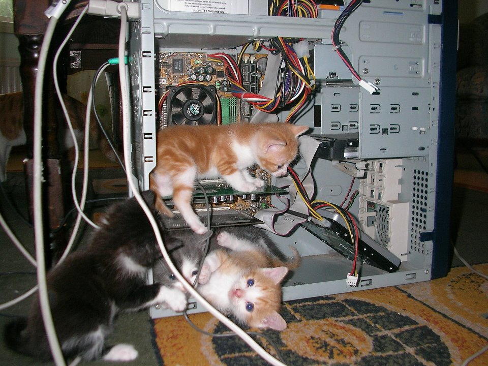 kittens fixing computers-cute-technology-cats