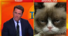 today-show-grumpy cat-cats-karl stefanovic-interview