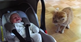 kitten meets newborn cute adorable cats
