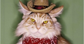meow mix kitties country song music cats cowboy cat