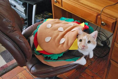 Funny-Halloween-Costumes-for-Cats cheeseburger burger kitten