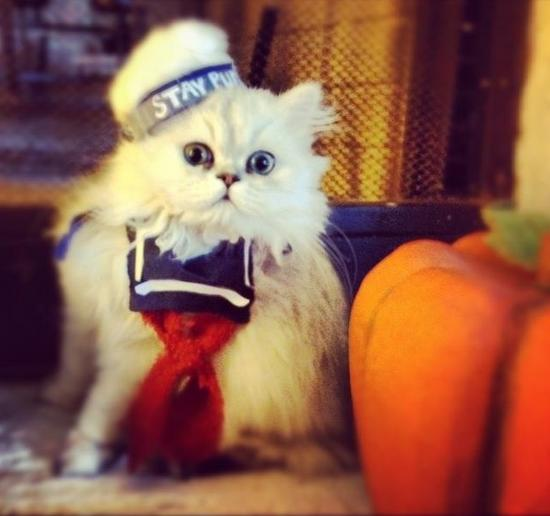 Stay Puft Marshmallow Man Cat Kitten Costume GhostBusters