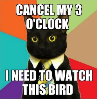 business cat meme i need to watch this bird