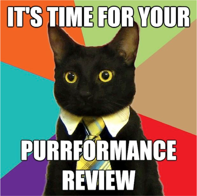 business cat meme purrrformance review funny