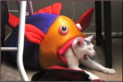 cat being eaten by giant fish costume funny