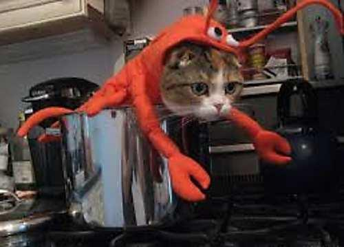 cat halloween costumes lobster kitten cute