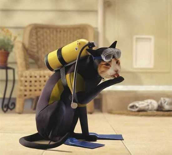funny cute Scuba-Cat-Halloween-Costume & Who Wears Halloween Costumes Better Than Cats? NO ONE! - Cats vs Cancer