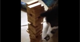 jenga cat cute curious kitty