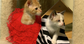 beetlejuice with kittens