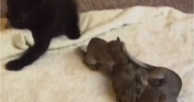 cat adopts baby squirrels cute adorable