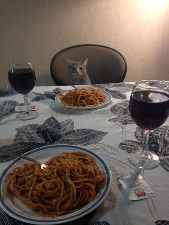cat dinner for two catlady