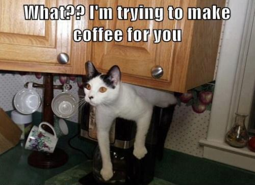 cats cat helping with coffee cup of joe