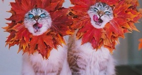 fall cats cute adorable kittens