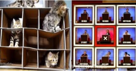 hollywood squares kittens cats cute boxes kitty