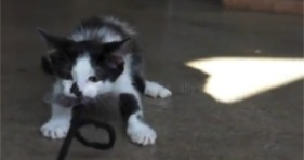 kitten dog cats tug of war cute cat funny