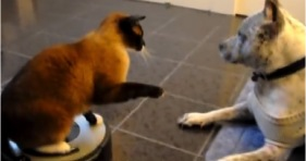 mean roomba cat jerk cats lol funny