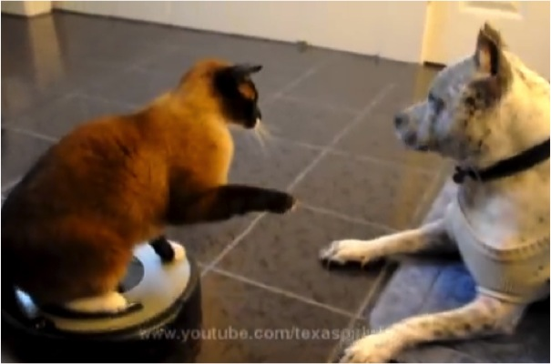 Dog Swats Cat Gif