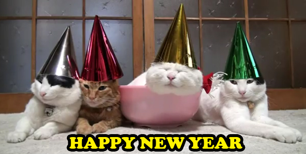 HAPPY-NEW-YEAR-CATS in cute kitty hats