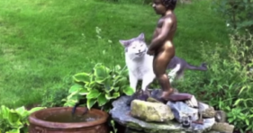 cat drinks from peeing statue