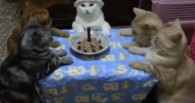 cat and five friends birthday party
