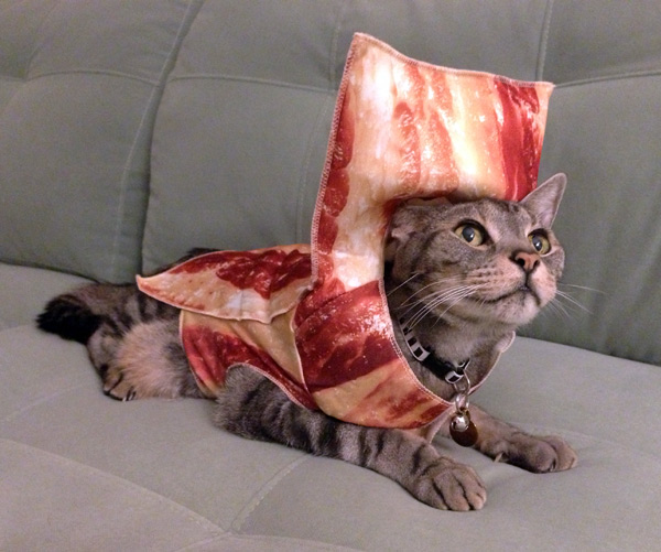 adorable bacon kitten
