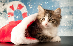 adorable kitten-peeks-out-christmas-stocking-snowflakes-candy-cane