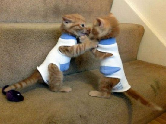 cat twins twinning lolcats funny