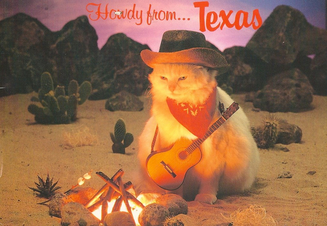 Cats - Cowboy Cat from Texas