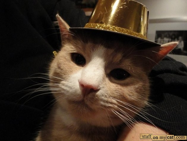 cute kitty happy new year cat hat