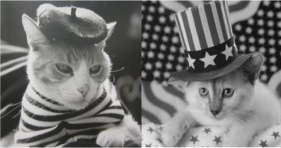 french cats france vs america cats funny