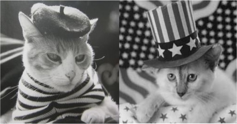 How French Cats See American Cats - Cats vs Cancer
