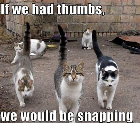 funny cat meme west side story cats