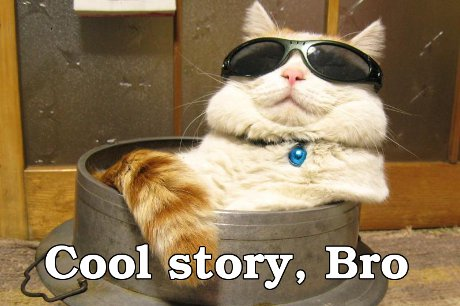 funny cool story bro cat