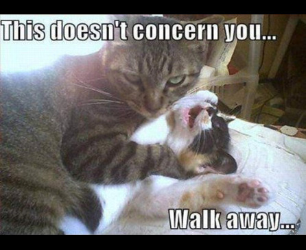 jerk cat evil kitty post your favorite cat meme just for fun psych forums