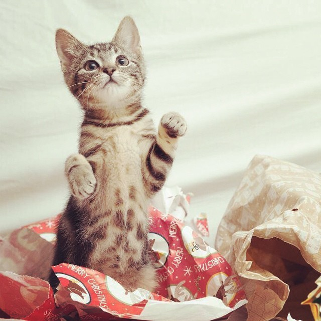 kitty unwrapping gifts cute cat christmas